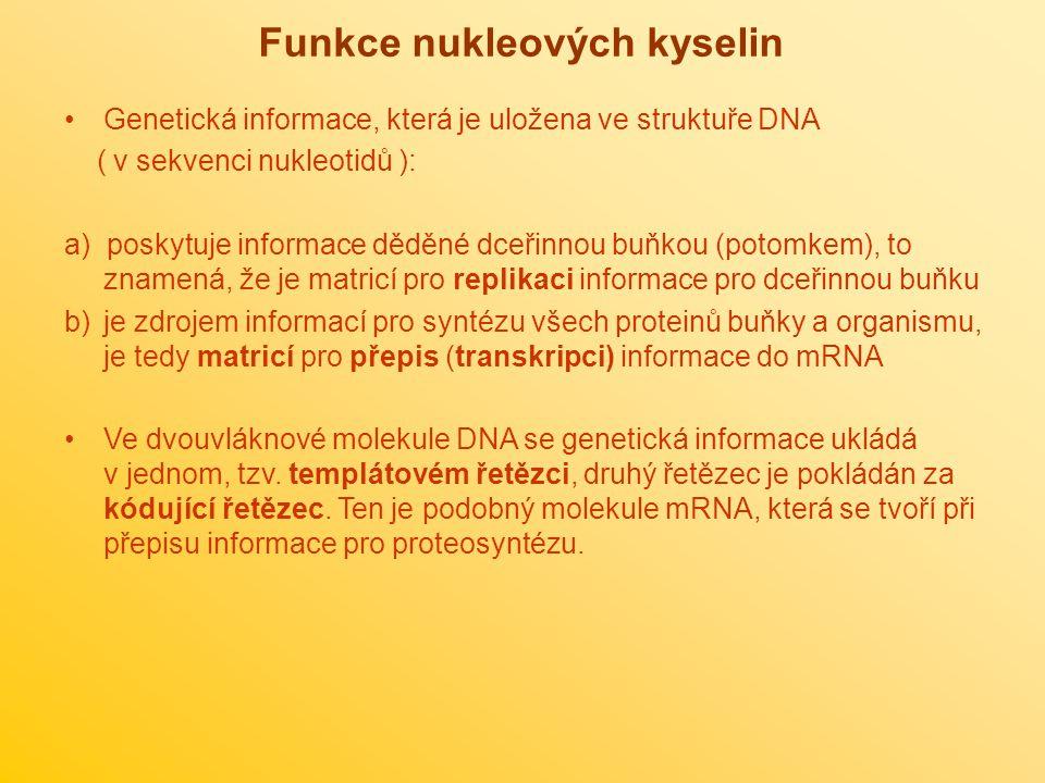Funkce nukleových kyselin