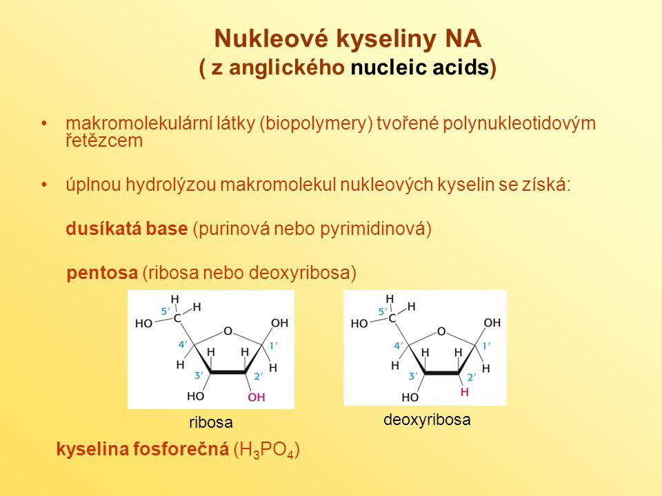 Nukleové kyseliny NA ( z anglického nucleic acids)