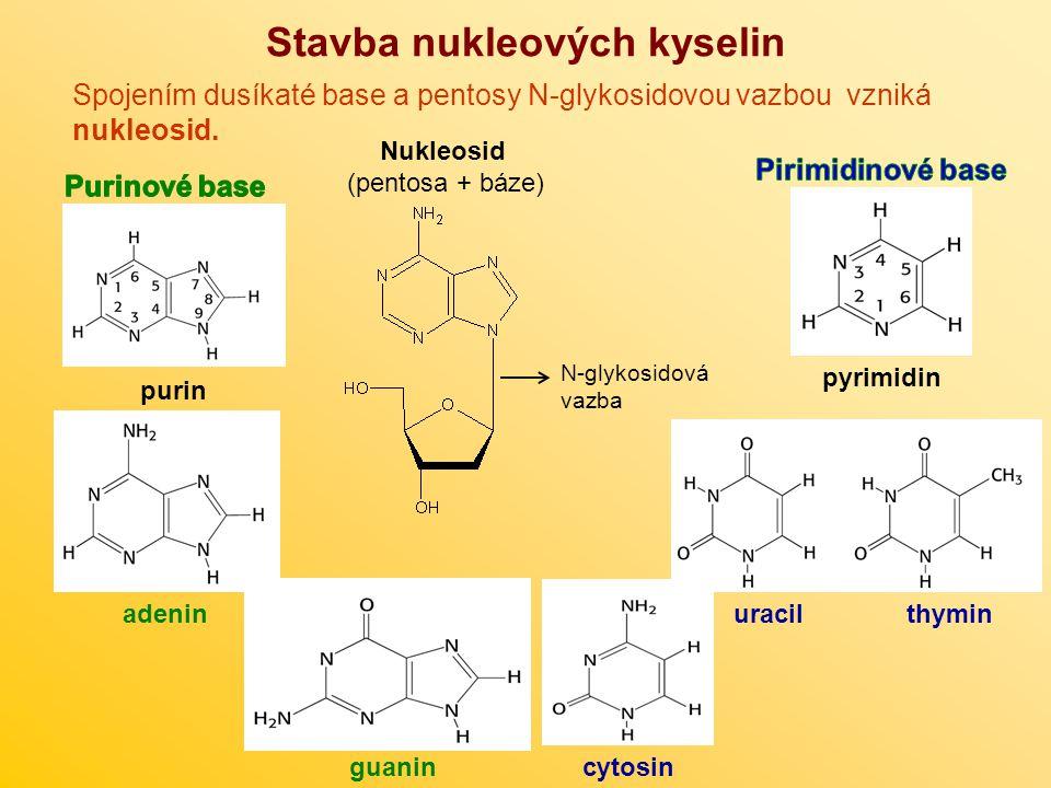 Stavba nukleových kyselin