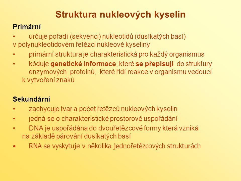 Struktura nukleových kyselin
