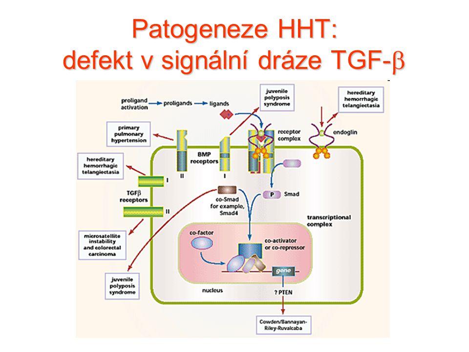 Patogeneze HHT: defekt v signální dráze TGF-b