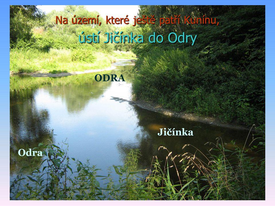 Na území, které ještě patří Kunínu, ústí Jičínka do Odry
