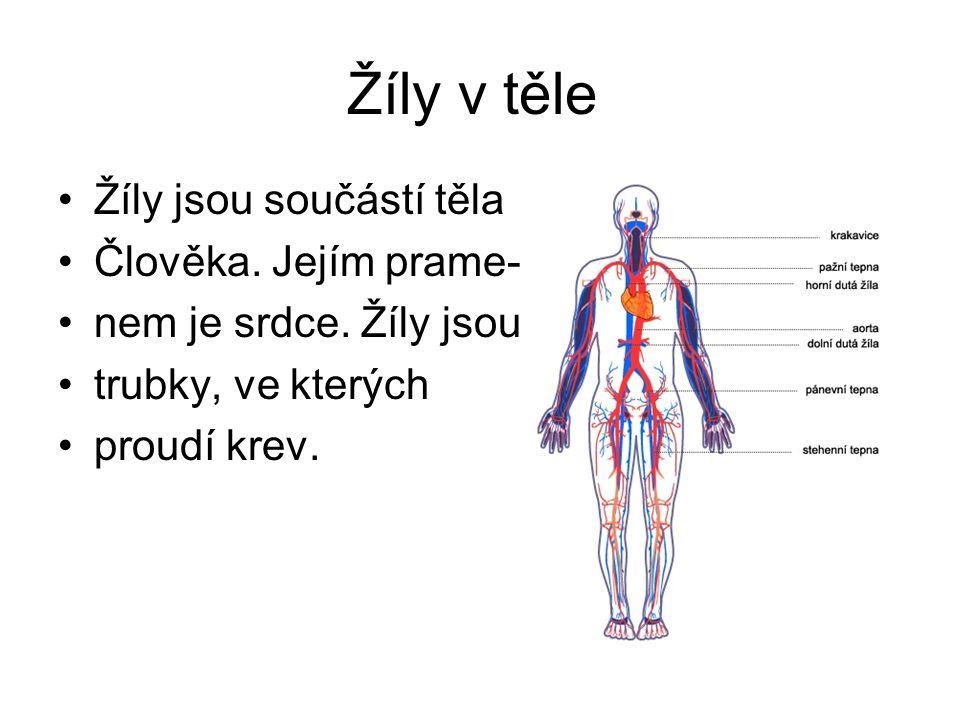 Žíly v těle Žíly jsou součástí těla Člověka. Jejím prame-