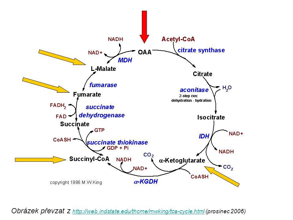 Obrázek převzat z http://web. indstate. edu/thcme/mwking/tca-cycle