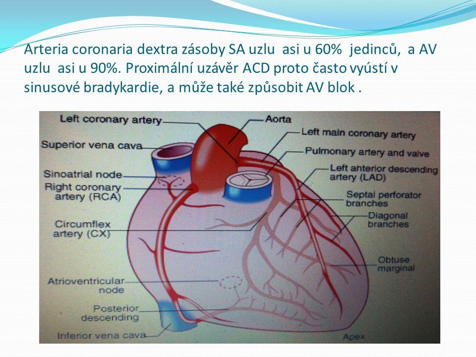 Arteria coronaria dextra zásoby SA uzlu asi u 60% jedinců, a AV uzlu asi u 90%.