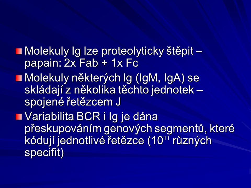 Molekuly Ig lze proteolyticky štěpit – papain: 2x Fab + 1x Fc