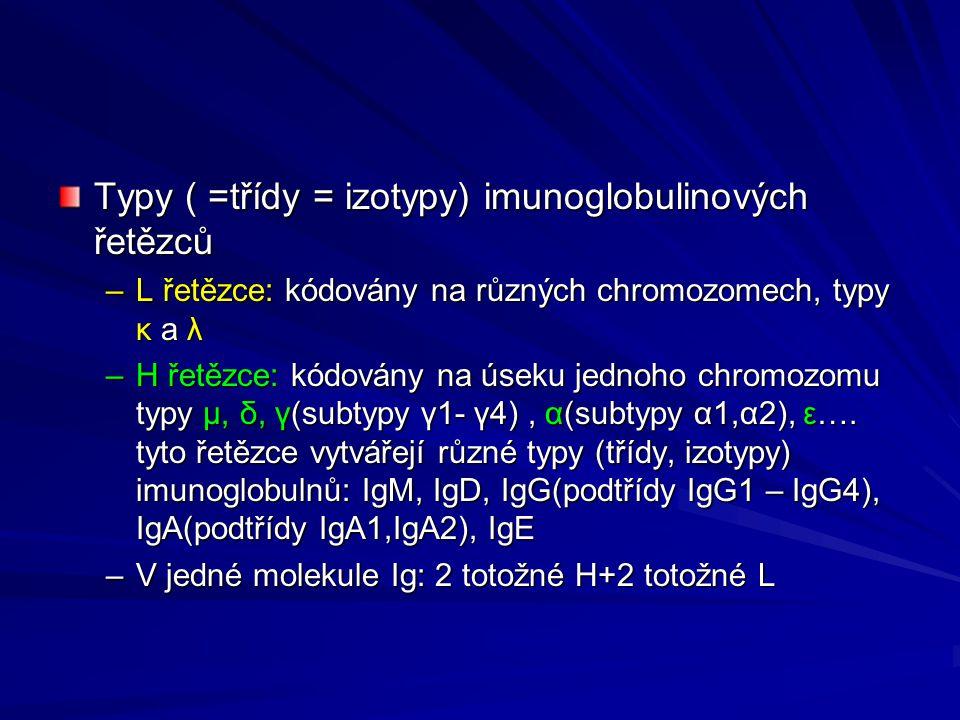 Typy ( =třídy = izotypy) imunoglobulinových řetězců