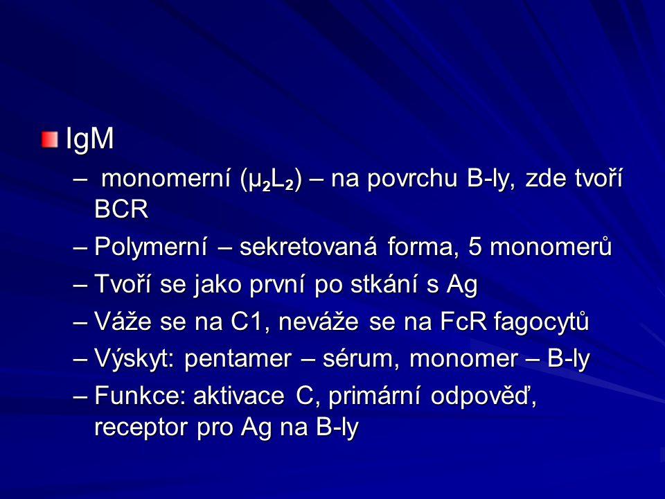 IgM monomerní (μ2L2) – na povrchu B-ly, zde tvoří BCR