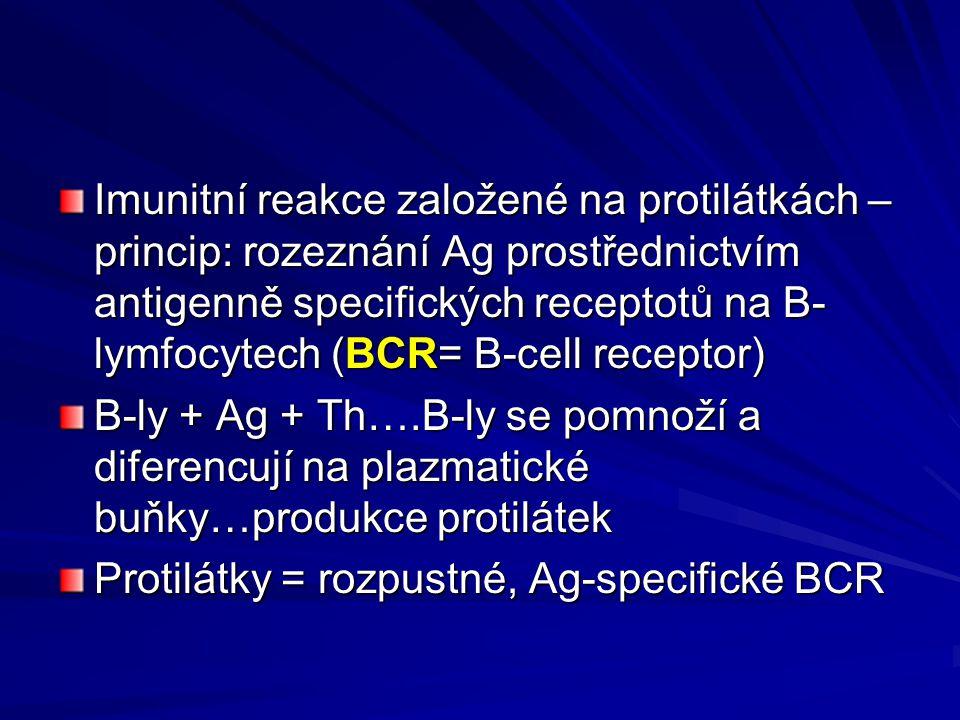 Imunitní reakce založené na protilátkách – princip: rozeznání Ag prostřednictvím antigenně specifických receptotů na B-lymfocytech (BCR= B-cell receptor)