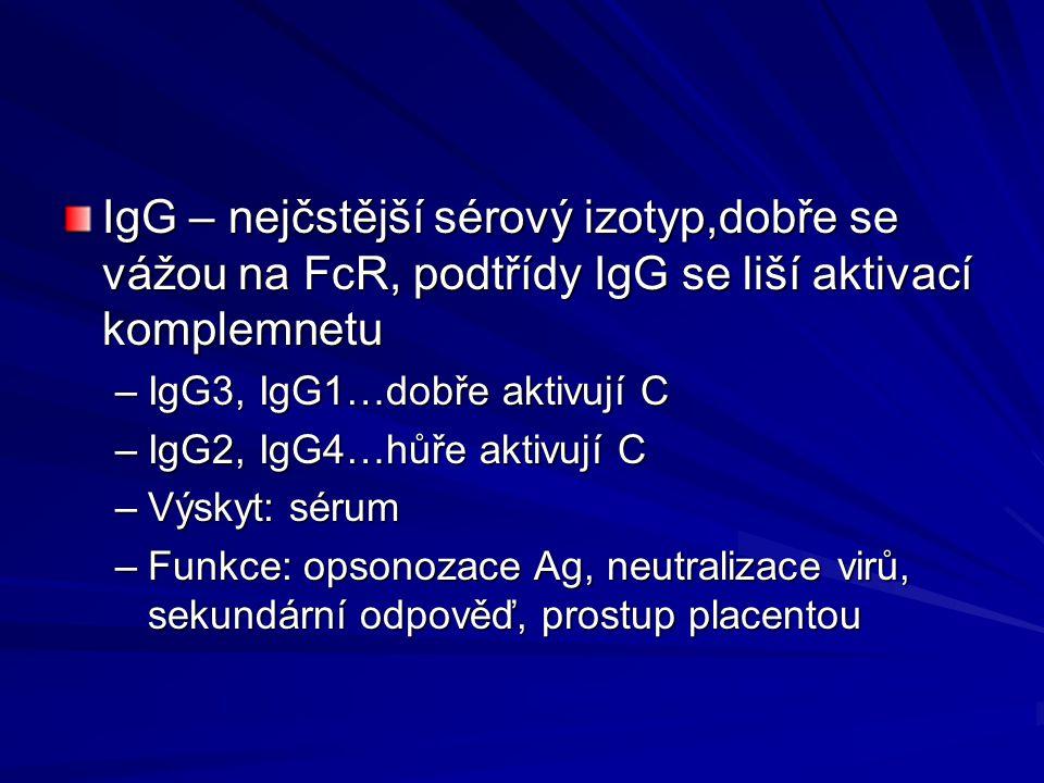 IgG – nejčstější sérový izotyp,dobře se vážou na FcR, podtřídy IgG se liší aktivací komplemnetu