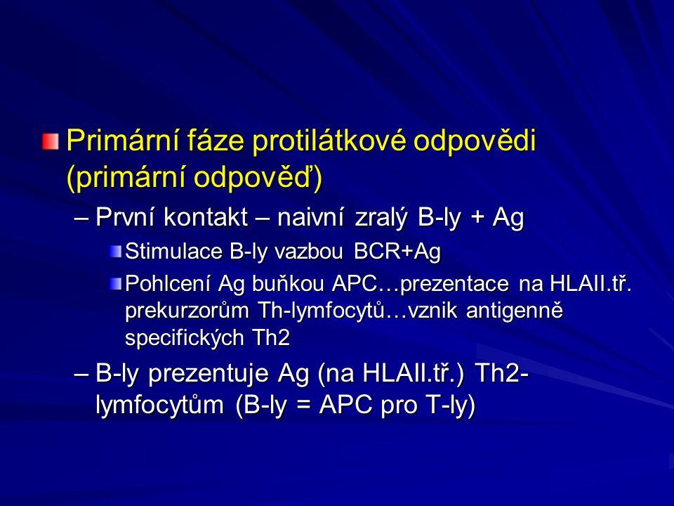 Primární fáze protilátkové odpovědi (primární odpověď)