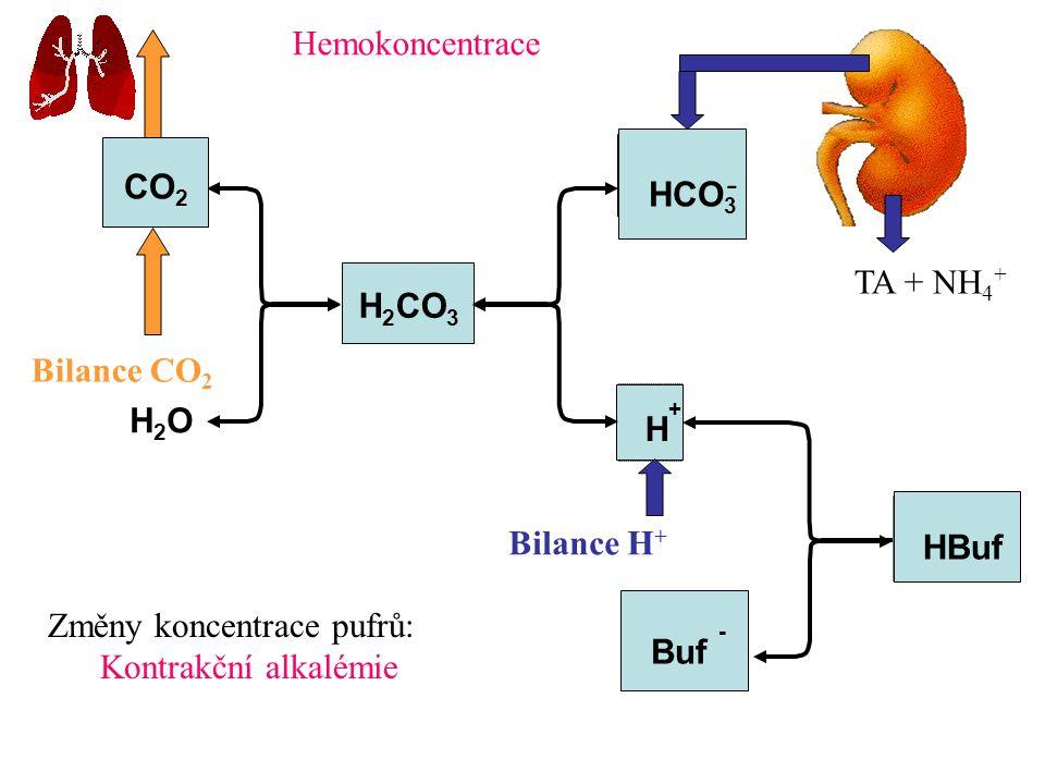 Hemokoncentrace CO2. - HCO3. TA + NH4+ H2CO3. Bilance CO2. H2O. H+ Bilance H+ HBuf. Změny koncentrace pufrů: