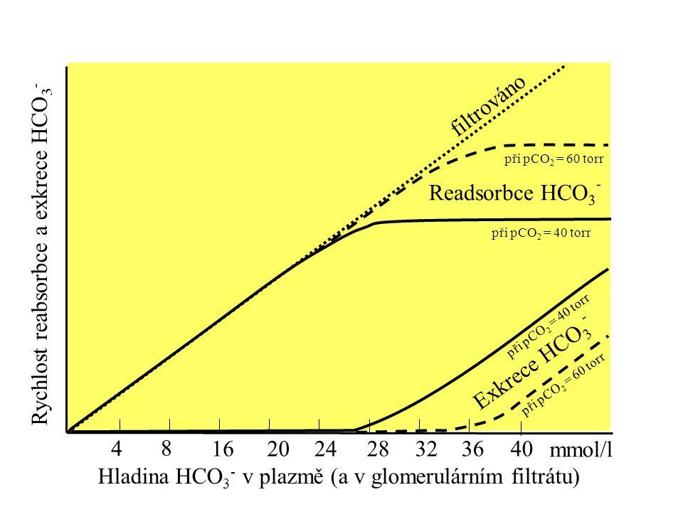Rychlost reabsorbce a exkrece HCO3-