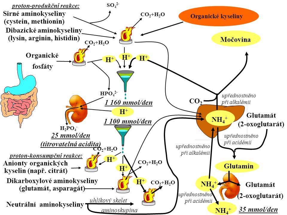 Dibazické aminokyseliny (lysin, arginin, histidin) Sirné aminokyseliny