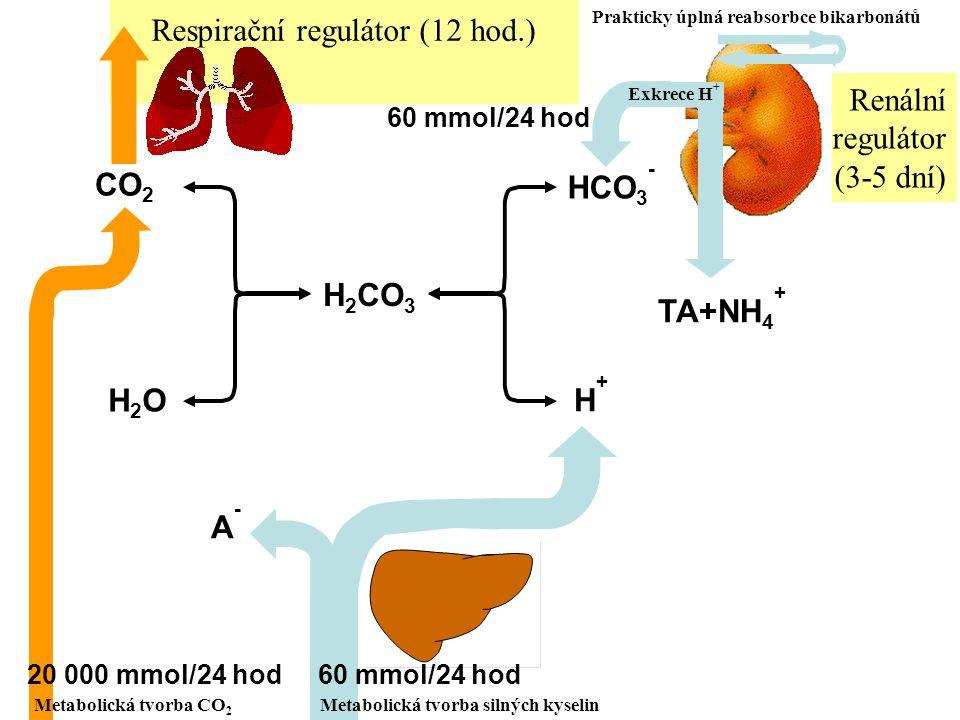 CO2 H2O H2CO3 HCO3- H+ A- TA+NH4+