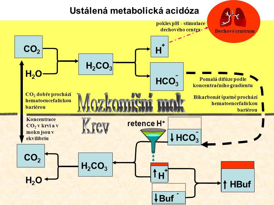 Mozkomíšní mok Krev Ustálená metabolická acidóza CO2 H+ H2CO3 H2O -