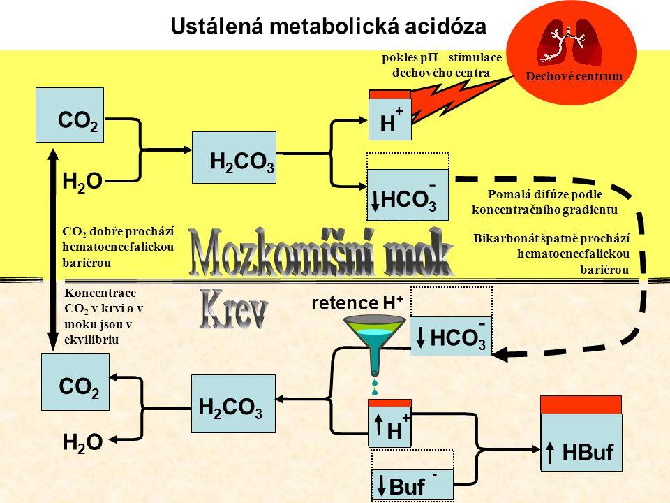 Mozkomíšní mok Krev Ustálená metabolická acidóza CO2 H2CO3 H2O - HCO3