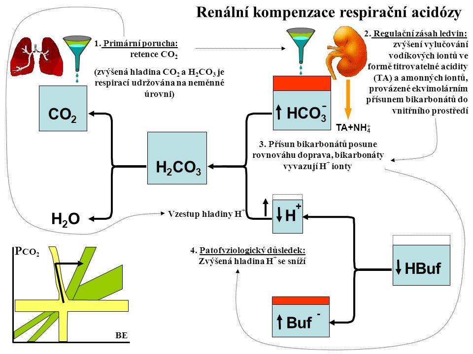 Renální kompenzace respirační acidózy