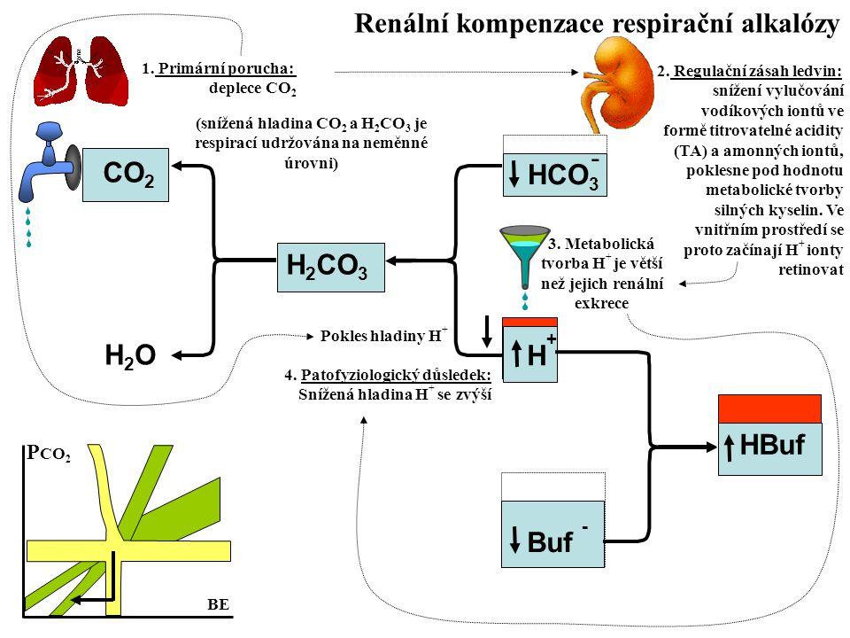 Renální kompenzace respirační alkalózy