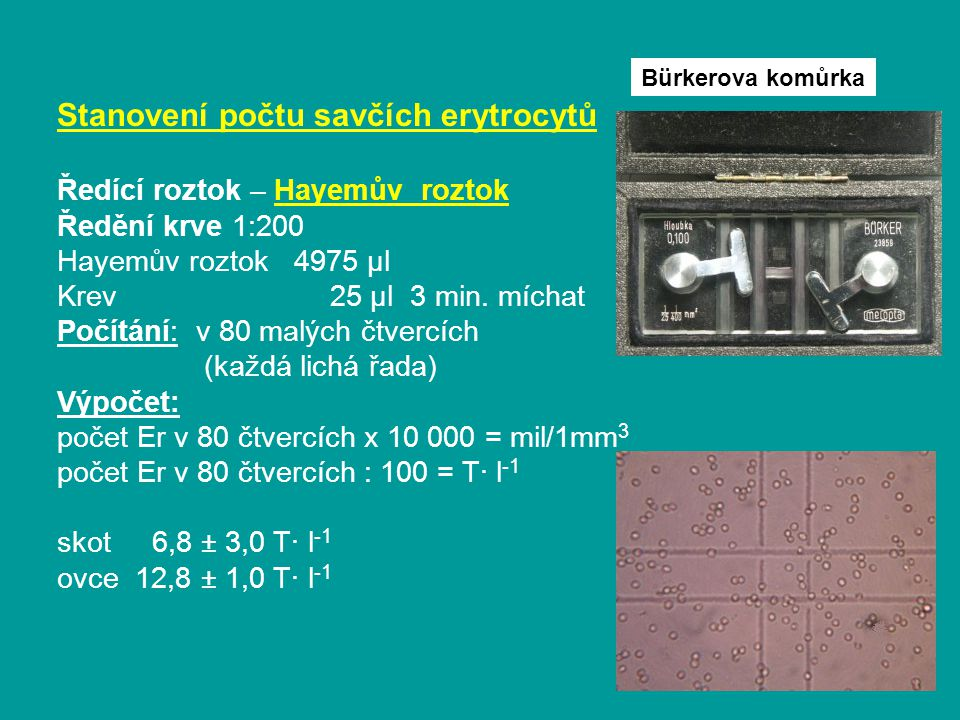 Stanovení počtu savčích erytrocytů