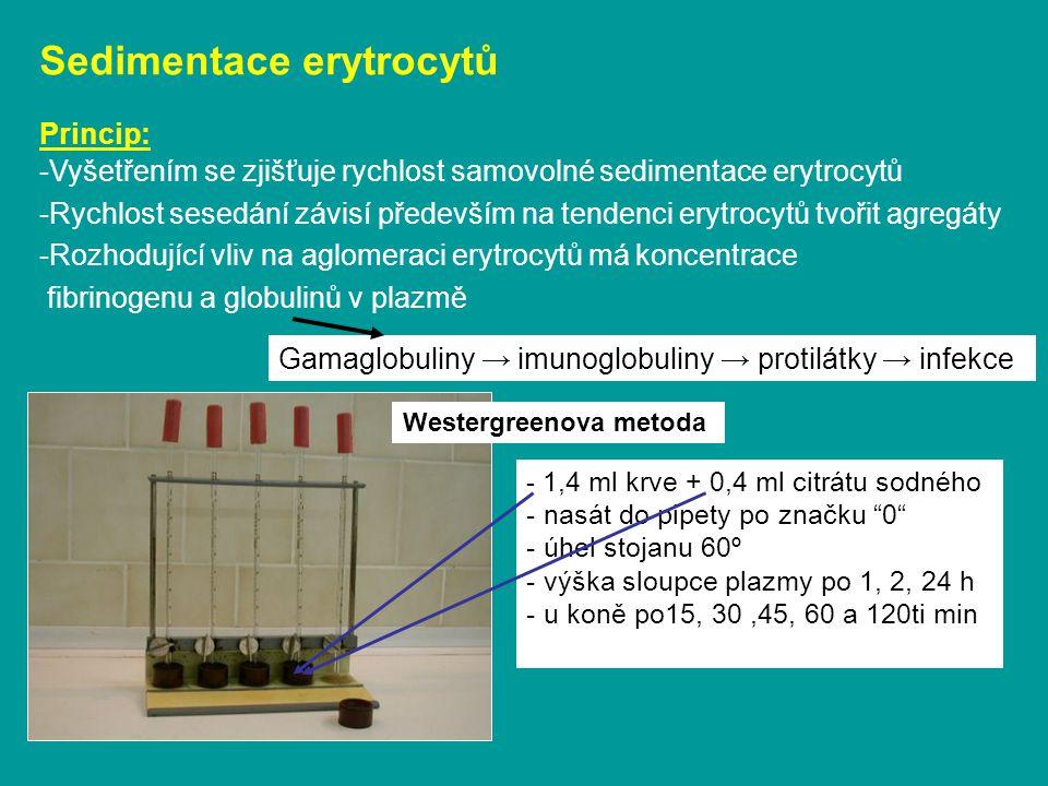 Sedimentace erytrocytů
