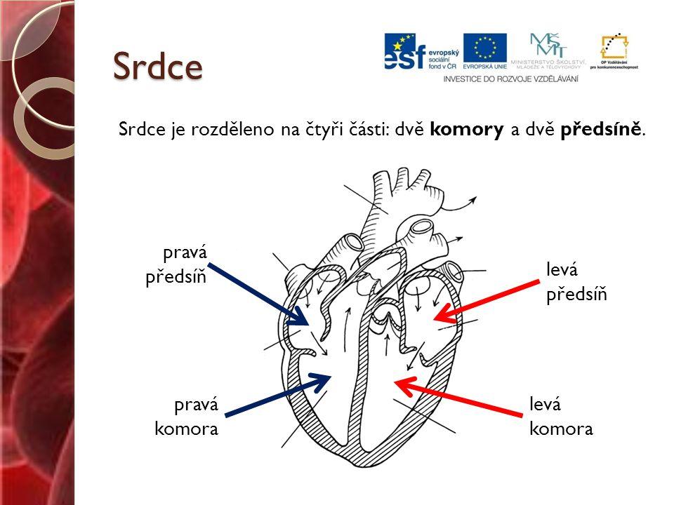 Srdce Srdce je rozděleno na čtyři části: dvě komory a dvě předsíně.