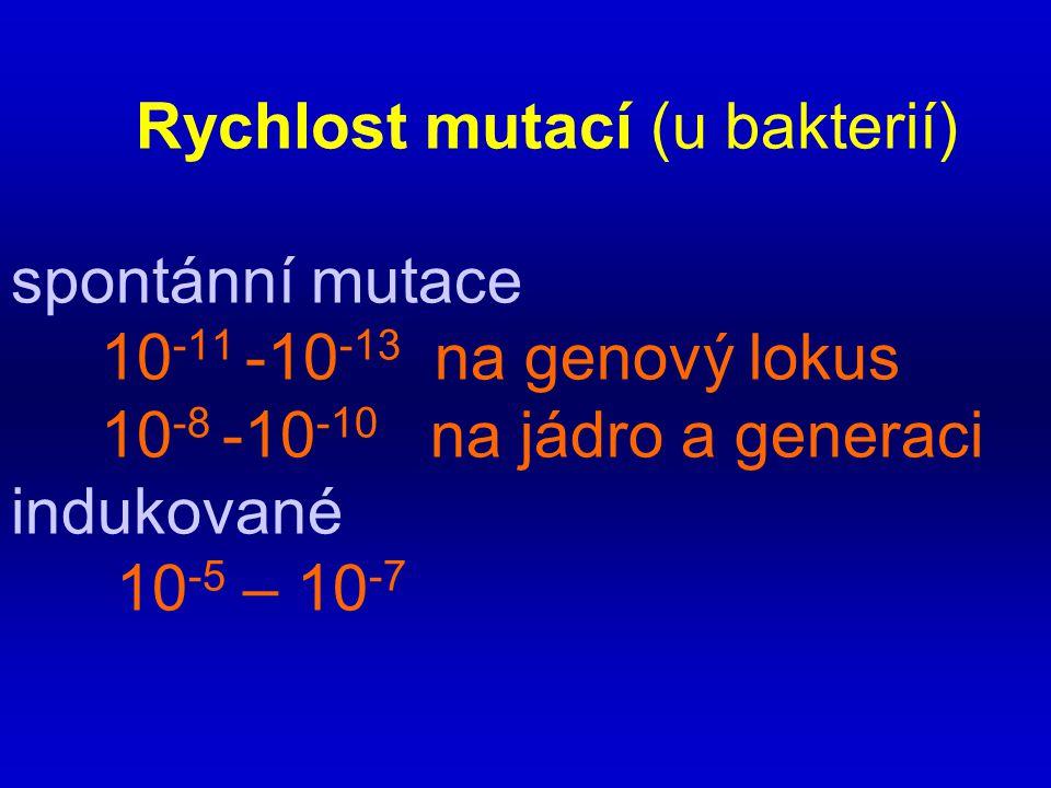Rychlost mutací (u bakterií) spontánní mutace 10-11 -10-13 na genový lokus 10-8 -10-10 na jádro a generaci indukované 10-5 – 10-7
