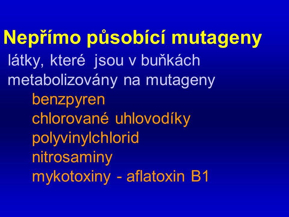 Nepřímo působící mutageny látky, které jsou v buňkách metabolizovány na mutageny benzpyren chlorované uhlovodíky polyvinylchlorid nitrosaminy mykotoxiny - aflatoxin B1