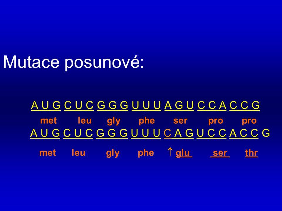 Mutace posunové:. A U G C U C G G G U U U A G U C C A C C G