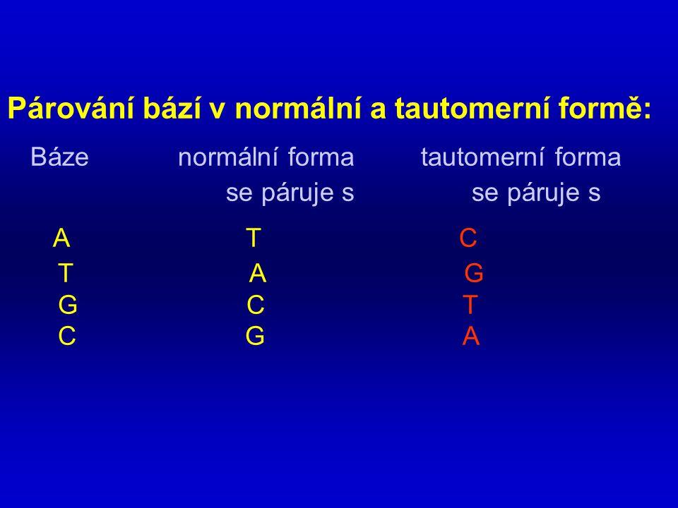 Párování bází v normální a tautomerní formě: Báze normální forma tautomerní forma se páruje s se páruje s A T C T A G G C T C G A