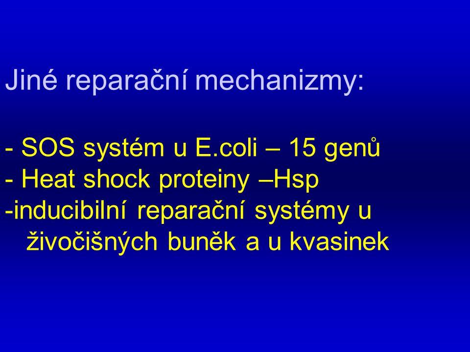 Jiné reparační mechanizmy: - SOS systém u E