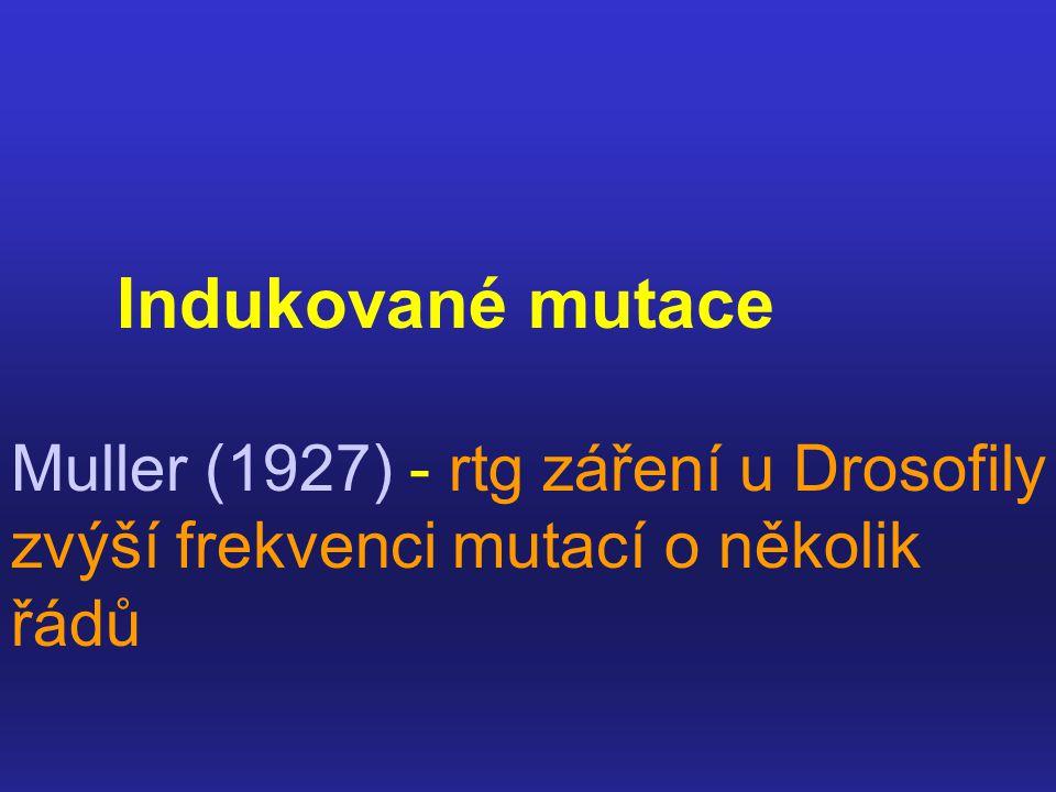 Indukované mutace Muller (1927) - rtg záření u Drosofily zvýší frekvenci mutací o několik řádů