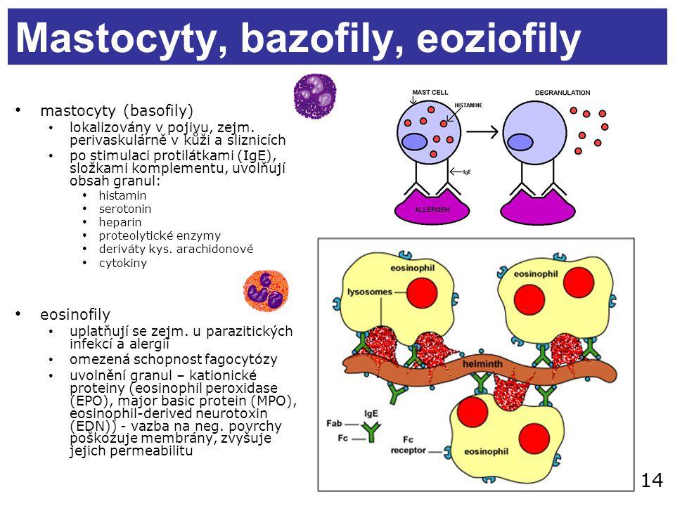 Mastocyty, bazofily, eoziofily