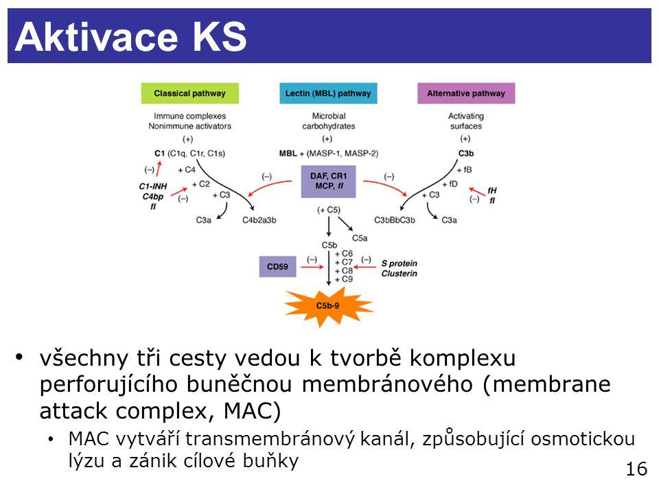 Aktivace KS všechny tři cesty vedou k tvorbě komplexu perforujícího buněčnou membránového (membrane attack complex, MAC)