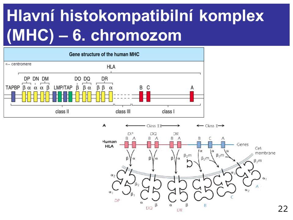 Hlavní histokompatibilní komplex (MHC) – 6. chromozom