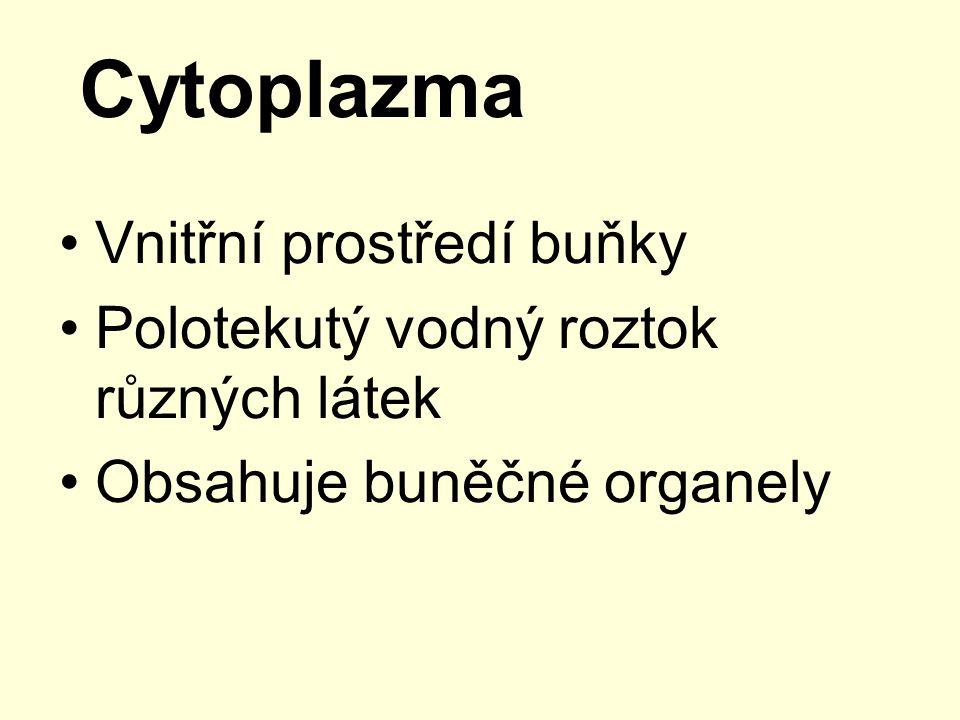 Cytoplazma Vnitřní prostředí buňky