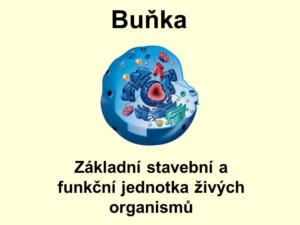 Základní stavební a funkční jednotka živých organismů