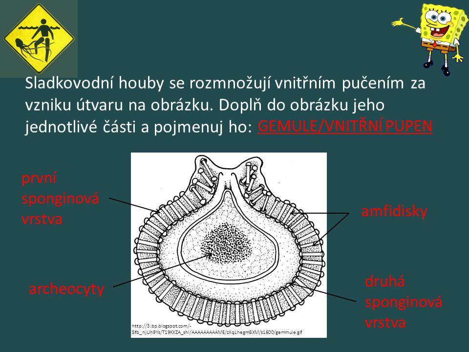 Sladkovodní houby se rozmnožují vnitřním pučením za vzniku útvaru na obrázku. Doplň do obrázku jeho jednotlivé části a pojmenuj ho: