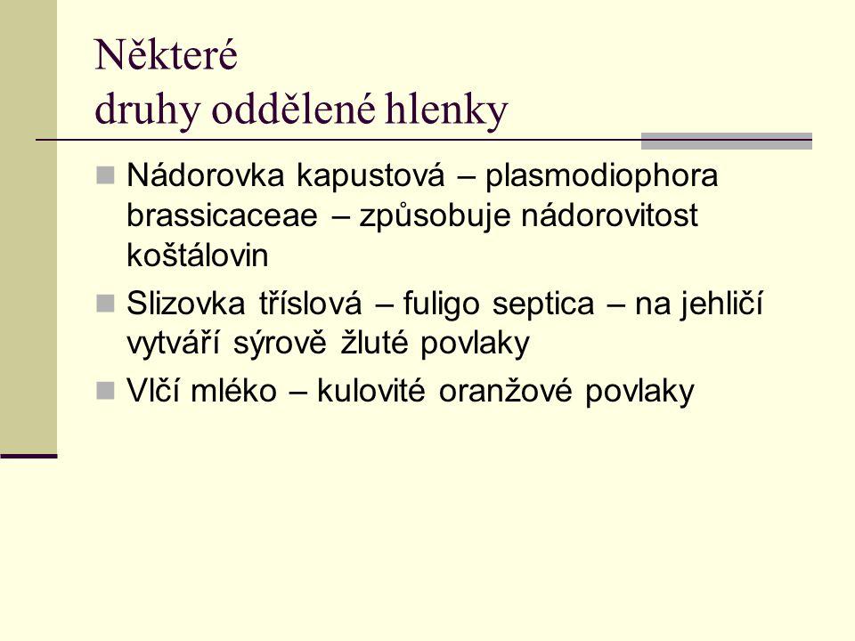 Některé druhy oddělené hlenky