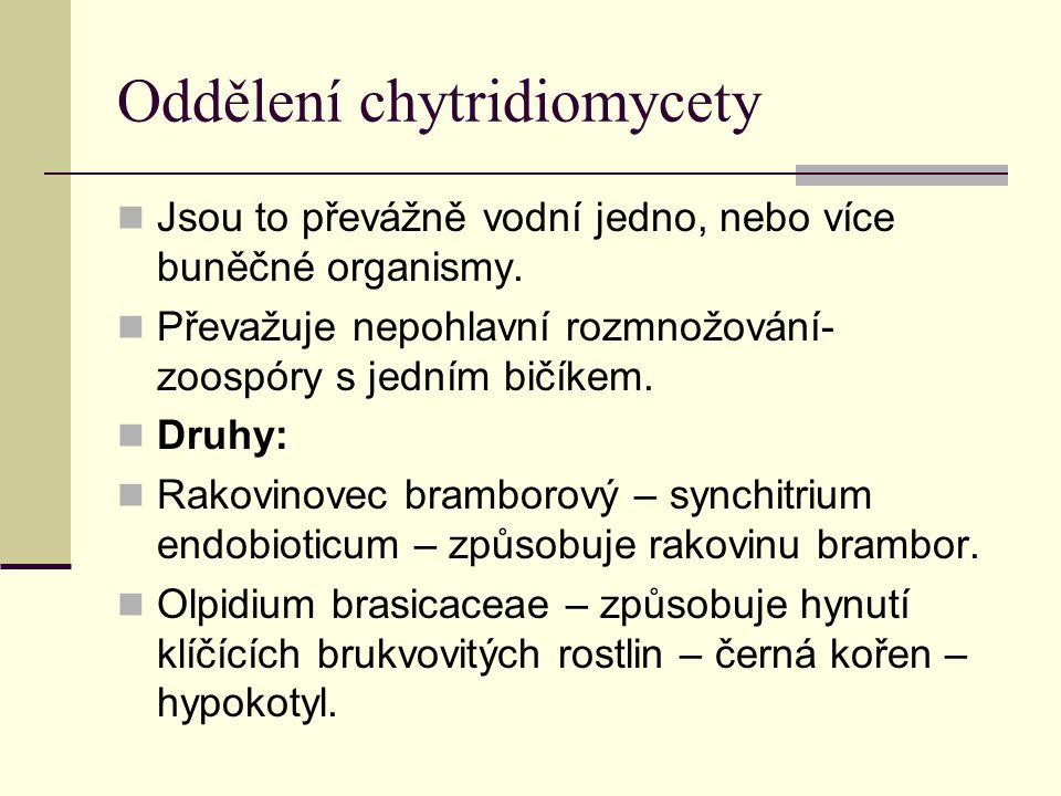 Oddělení chytridiomycety