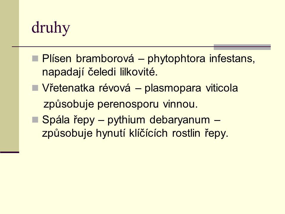 druhy Plísen bramborová – phytophtora infestans, napadají čeledi lilkovité. Vřetenatka révová – plasmopara viticola.