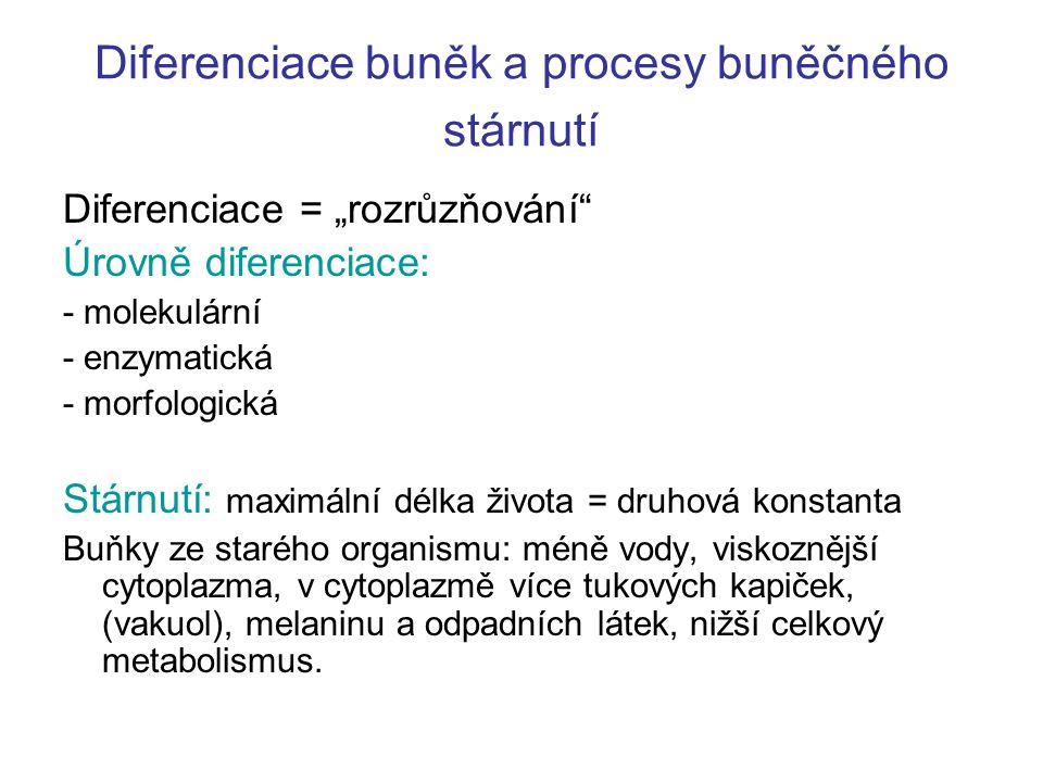 Diferenciace buněk a procesy buněčného stárnutí