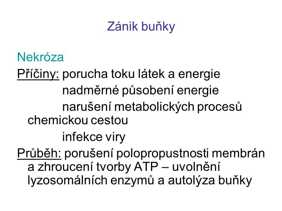 Zánik buňky Nekróza. Příčiny: porucha toku látek a energie. nadměrné působení energie. narušení metabolických procesů chemickou cestou.