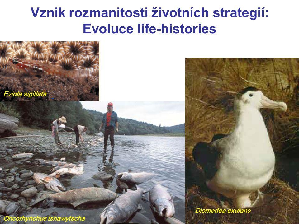 Vznik rozmanitosti životních strategií: Evoluce life-histories