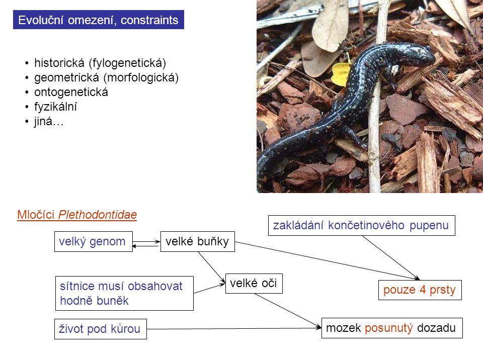 Evoluční omezení, constraints