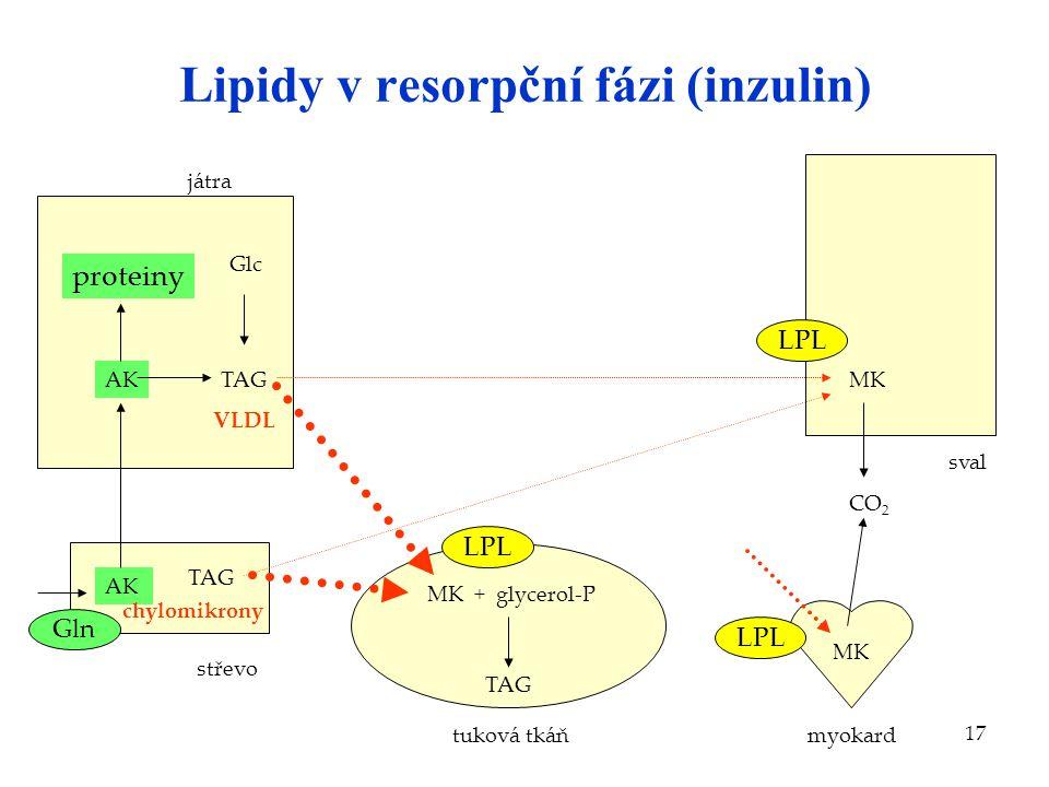 Lipidy v resorpční fázi (inzulin)