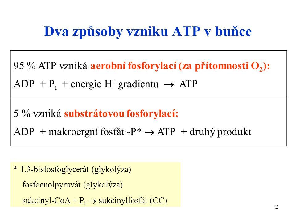 Dva způsoby vzniku ATP v buňce