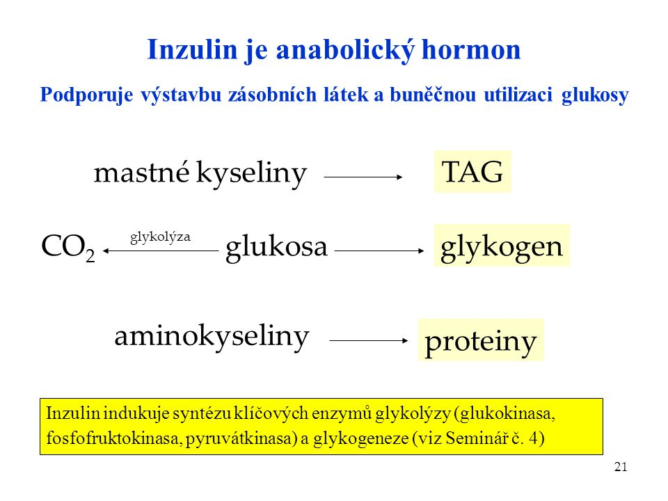 Inzulin je anabolický hormon