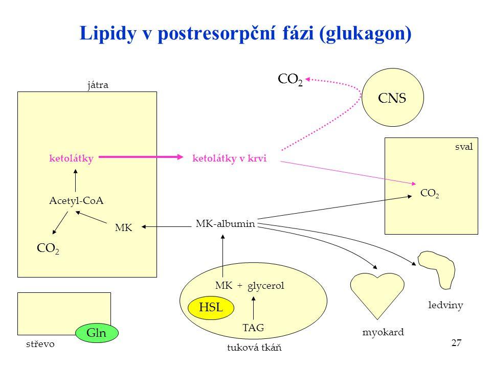 Lipidy v postresorpční fázi (glukagon)