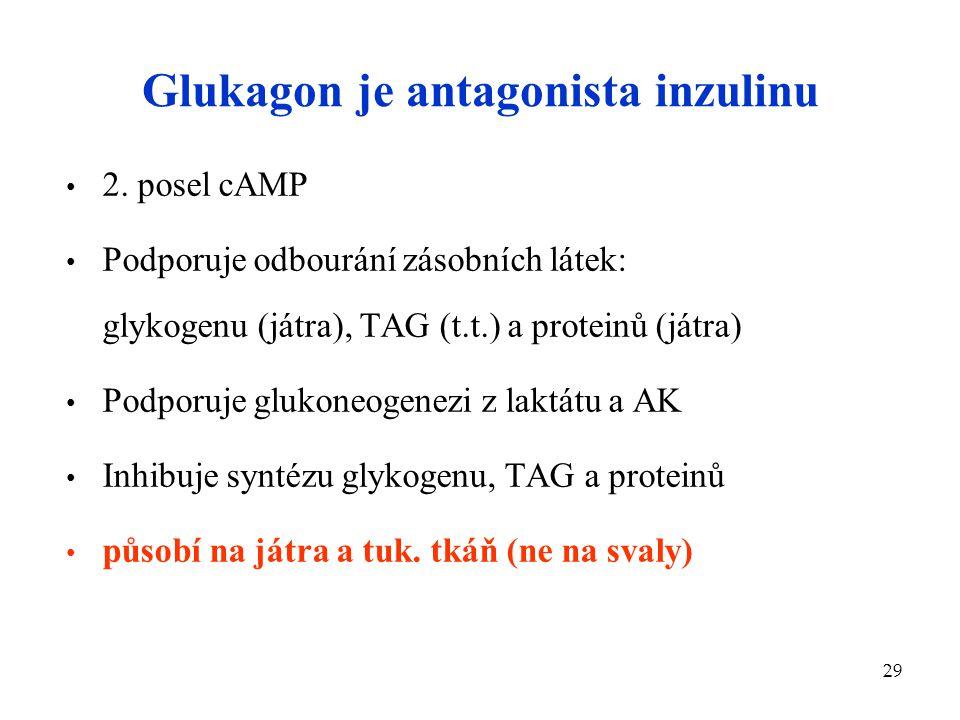 Glukagon je antagonista inzulinu